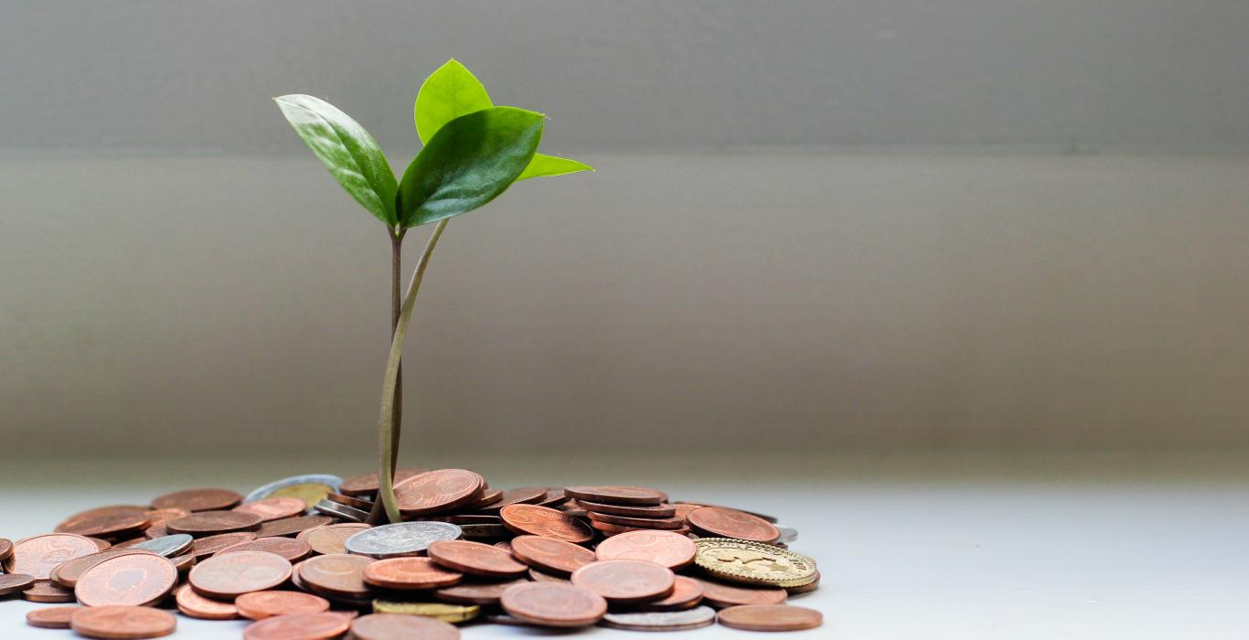 leaves sprouting out of coins