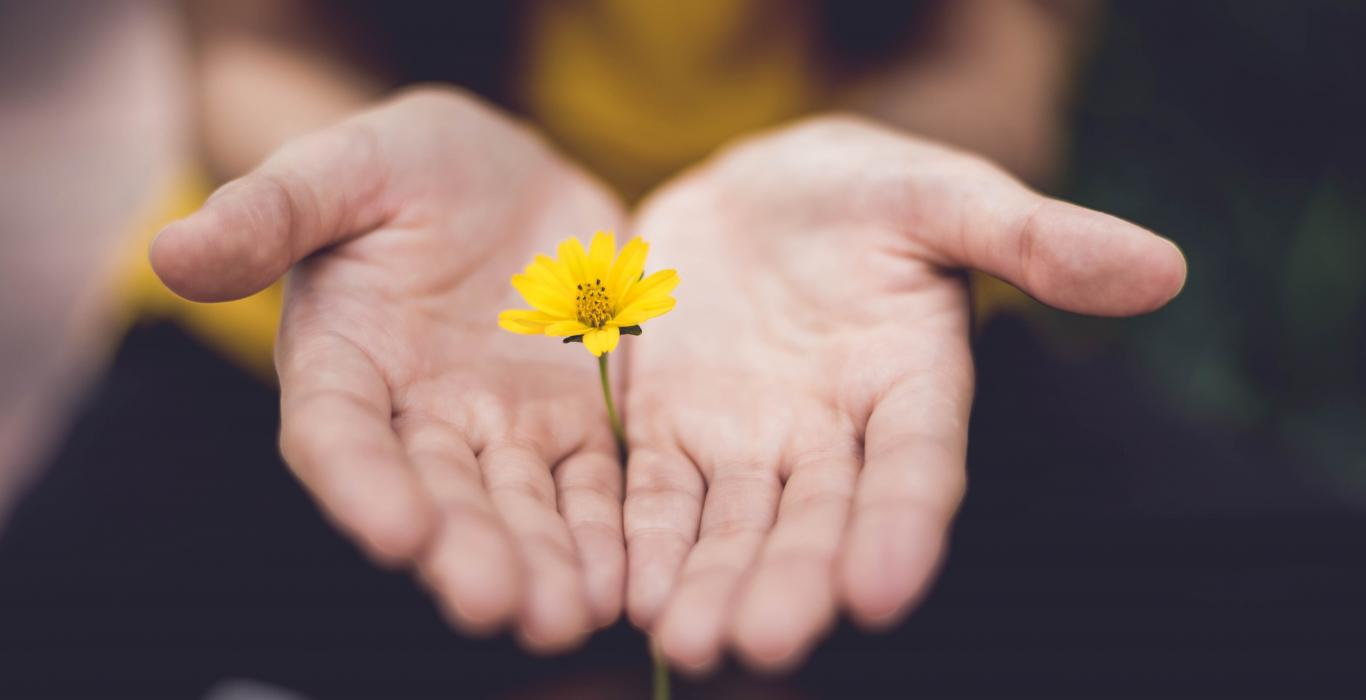 two hands holding yellow flower